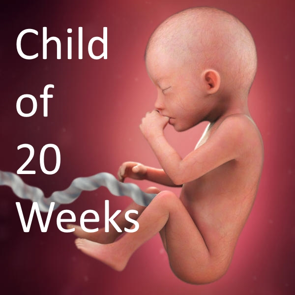 child of 20 weeks