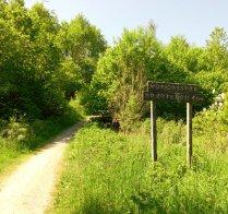 Vid backens slut leder stigen in i skogen.