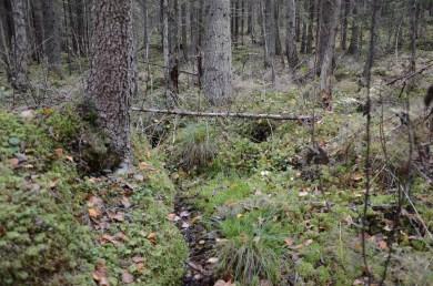 Yksityisellä suojelualueella on runsaslahopuustoinen korpinotko.