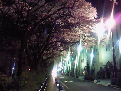 風の散歩道の「夜桜」