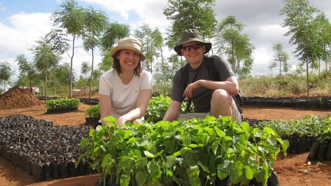 Bild med några få fröplantor i bakgrunden i Kiambere 2008