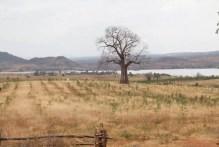 Kiambere-plantagen i februari 2012