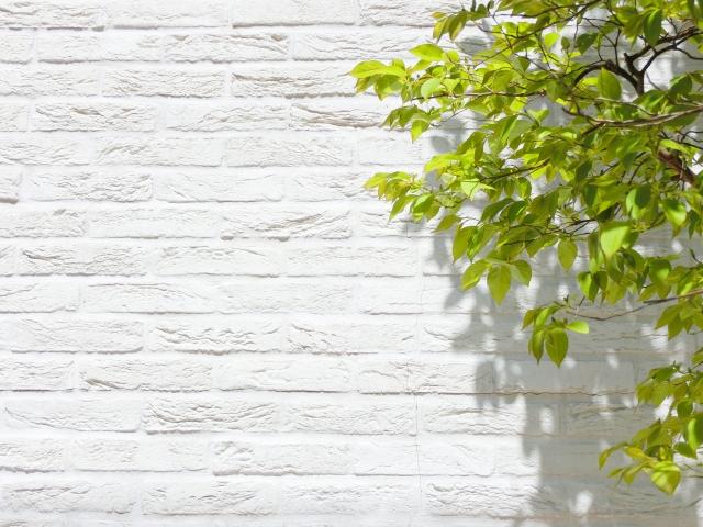 白い壁と5月の若葉