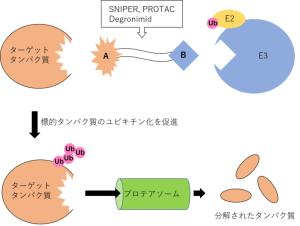 SNIPER(スナイパー), PROTAC(プロタック), Degronimidの原理や作用機序