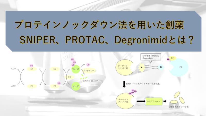 プロテインノックダウン法(protein knockdown)を用いた創薬:スナイパー(SNIPER)、プロタック(PROTAC)、Degronimidとは?