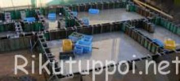 blog_import_560f8c129031a