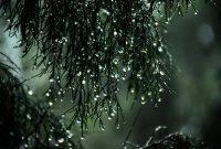 hutan hujan memiliki ciri khas curah hujan yang sangat tinggi