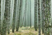hutan musim merupakan salah satu jenis hutan menurut sifat musim