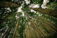hutan dibagi menjadi 2 menurut asalnya yaitu hutan primer dan sekunder
