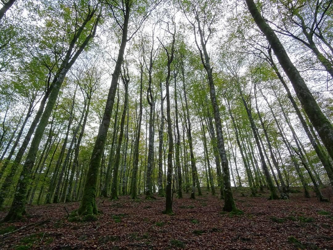 hutan musim dibagi berdasarkan ketinggian dan curah hujan