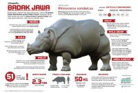 infografis badak jawa
