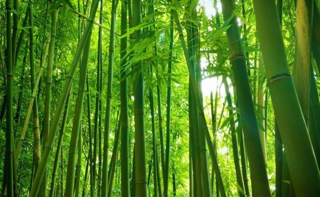 Musik Bambu Instrumen Cute766