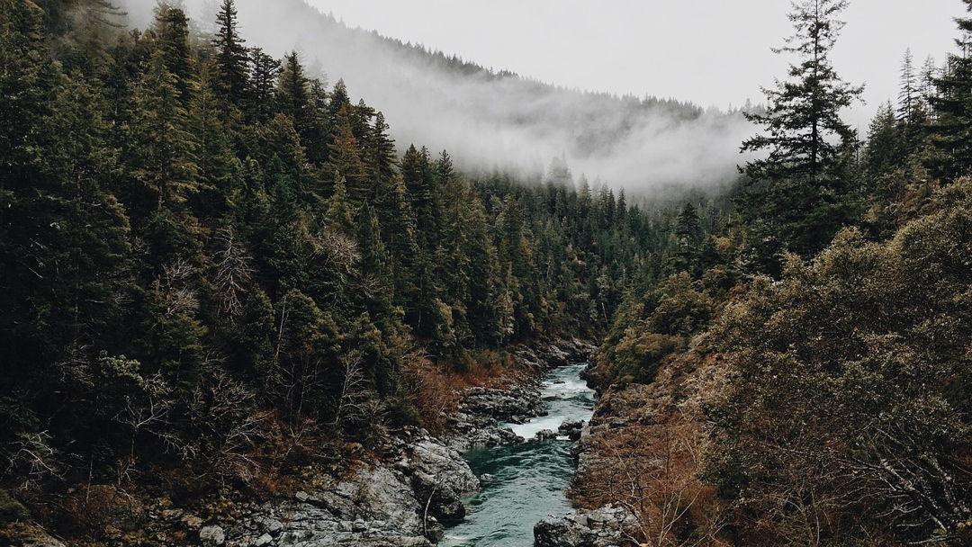 hutan konifer