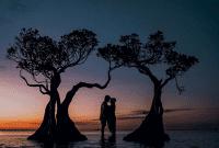 pohon menari