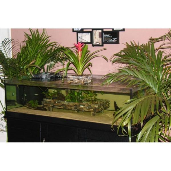 Diy 10 Gallon Rimless Aquarium - Year of Clean Water