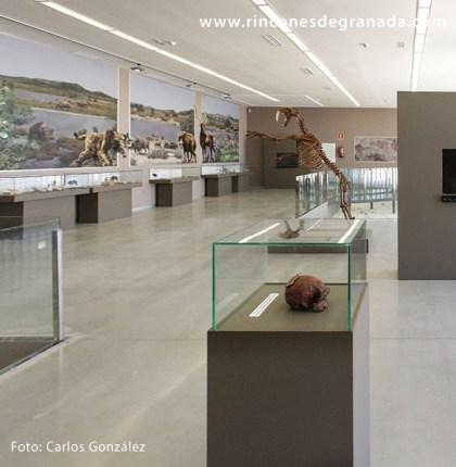 MUSEO DE LA PREHISTORIA Y PALEONTOLOGÍA DE ORCE