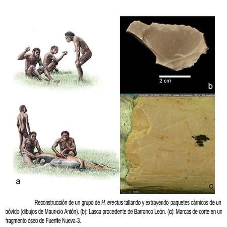 Reconstrucción de un grupo de H. erectus tallando y extrayendo paquetes cárnicos de un bóvido