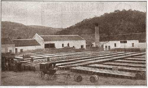 LA RESINERA - 1916