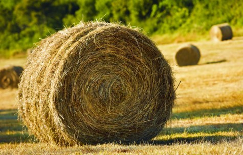 bale-of-hay-1347040