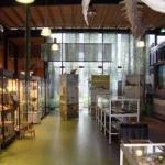 oertijdmuseum-vitrine-150x150 Het Creatief Collectief