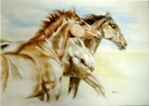 paarden Martine