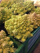 This is Romanescu - a kind of cauliflower