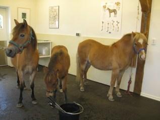 3horses