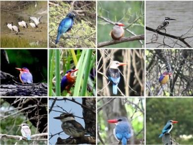 vogels11