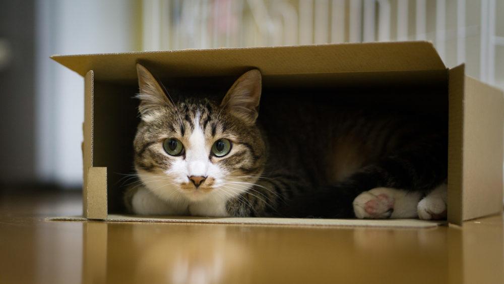 潜り込むネコ