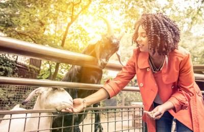動物に癒やされる!動物園でハッピーに過ごすためのマナーとは?