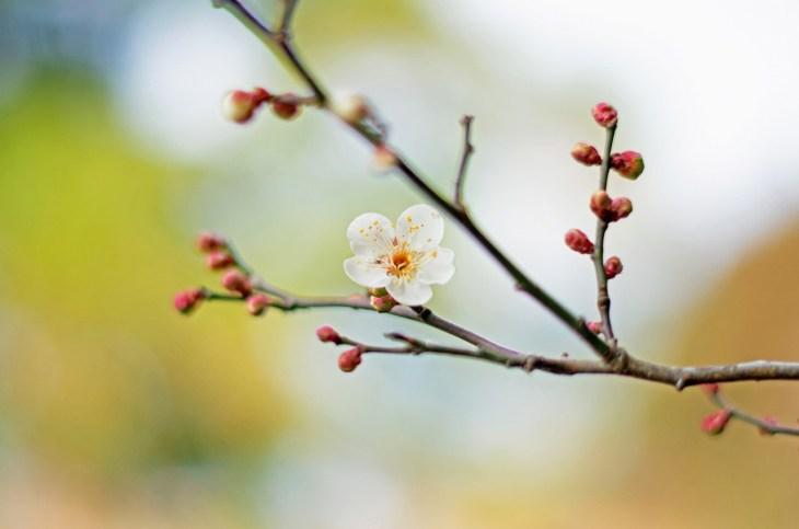 万葉集とは何か?現存する最古の和歌集から学ぶ日本の心 - Rinto~凛と~