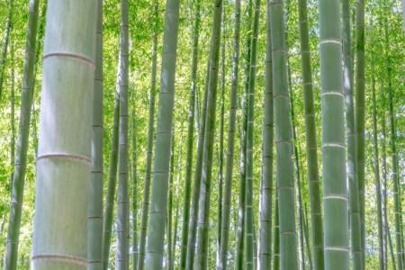 考察の余地あり、謎多き『竹取物語』を5つのキーワードで解説!