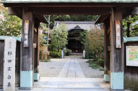 【蘭学事始】日本の蘭学を切り開いた「杉田玄白」とは?わかりやすく解説