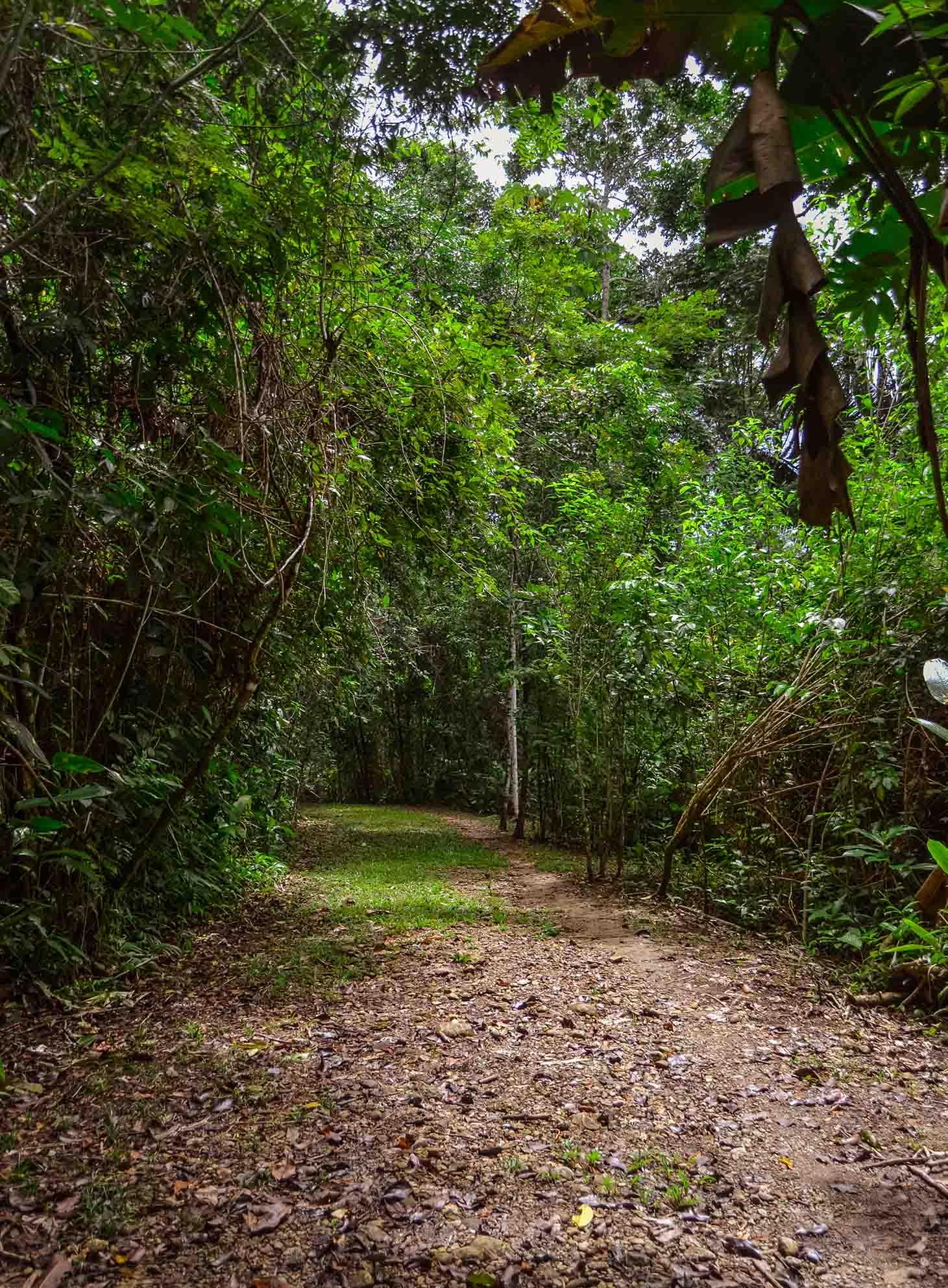 PG_Toledo_Colombia_nature_Rio_Blanco_National_Park_Hammock_Bridge_Waterfall_Belize_Nature_trail