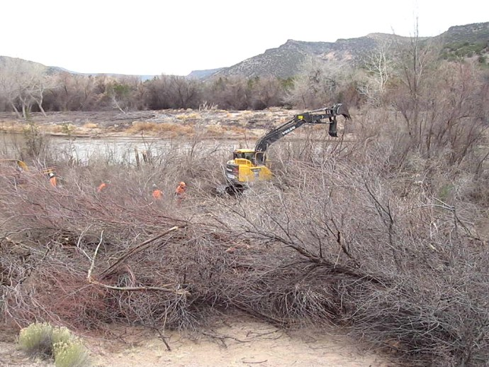 15. Acre by acre progress was made using an excavator to help clear the way for the sawyers and laborers who then cut and chipped the trunks and branches. Great care was given to identifying and preserving what remained of the native understory.