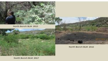 32. River Source has continued to do the necessary monitoring the and have transects in several different parts of the project areas. They also have established many photo points with before and after photos that help monitor the progress.