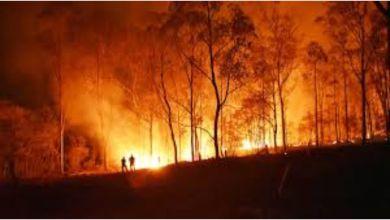 Photo of La NASA seleccionó un proyecto de jóvenes argentinos para controlar incendios forestales con tecnología