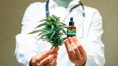 Photo of El Gobierno autorizó el autocultivo y la venta en farmacias de aceites de cannabis en todo el país