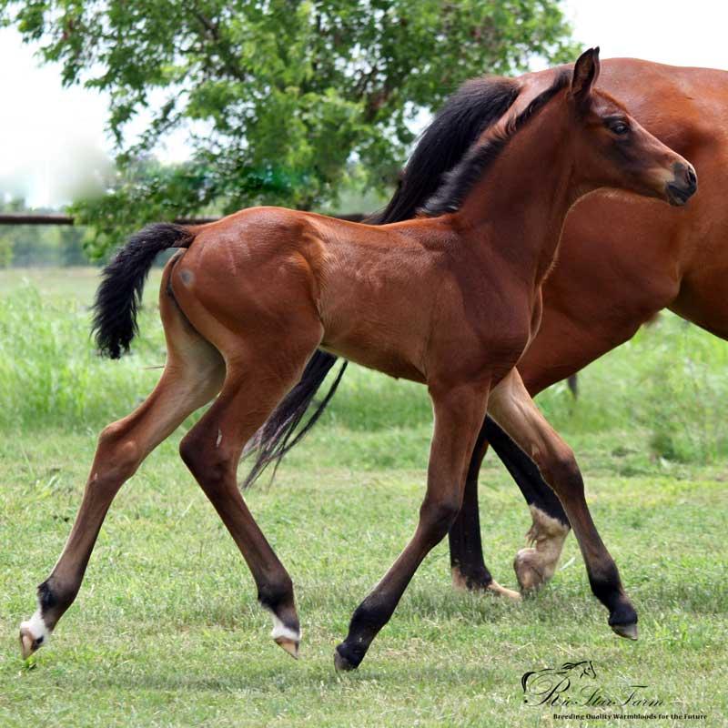20140606 999 200 Foals