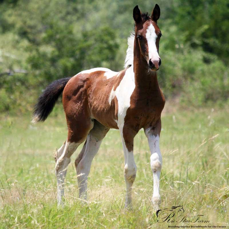 20140711 999 34 Foals