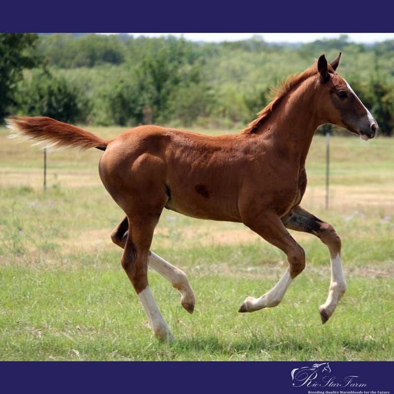 20150721 1454 1 Foals