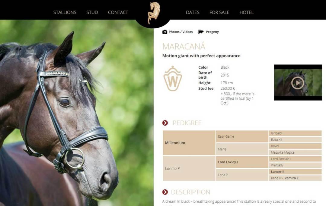 Maracana Stallion
