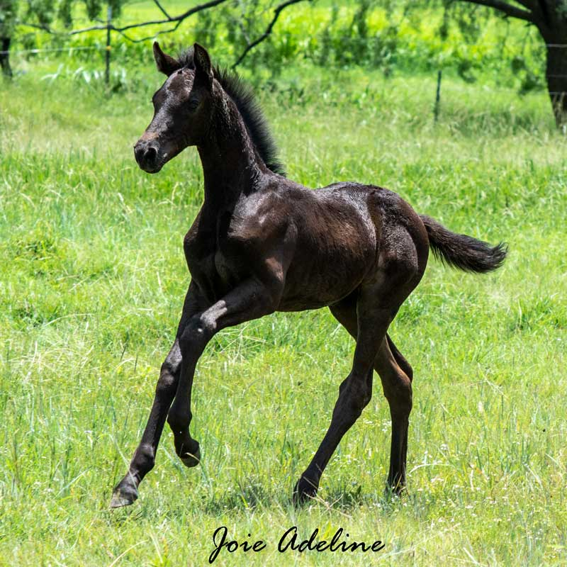 Picture of Joie Adeline (Morricone x Freestyle)