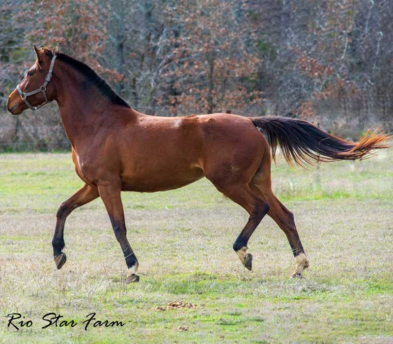 Picture of Summer Dance RSF (Sir James x Sempatico)