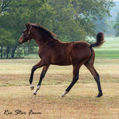 Picture of Promise of Rio Star (Gaudi x Roemer)