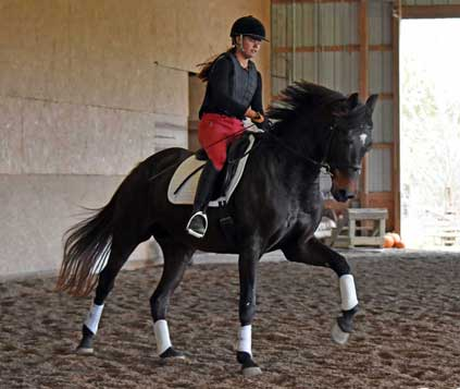 Picture of Joie Grace (Freestyle x Cicero)