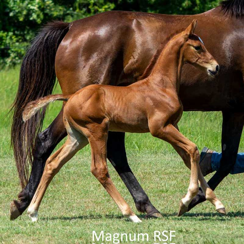 Photo of Magnum RSF (Maracana x Freestyle x Cicero)