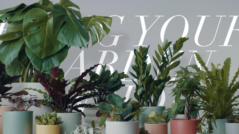 Reside Moments: Bring Your Garden Inside