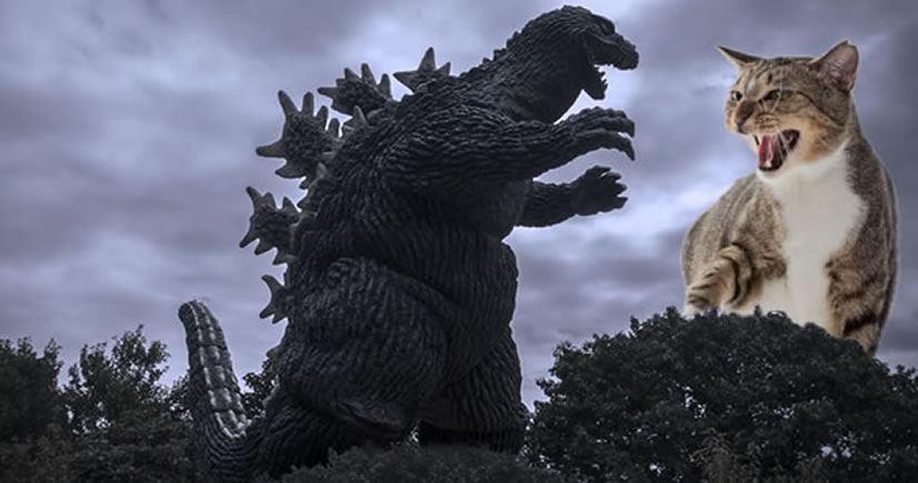 The Ultimate Battle Godzilla Versus Cats  Riot Daily