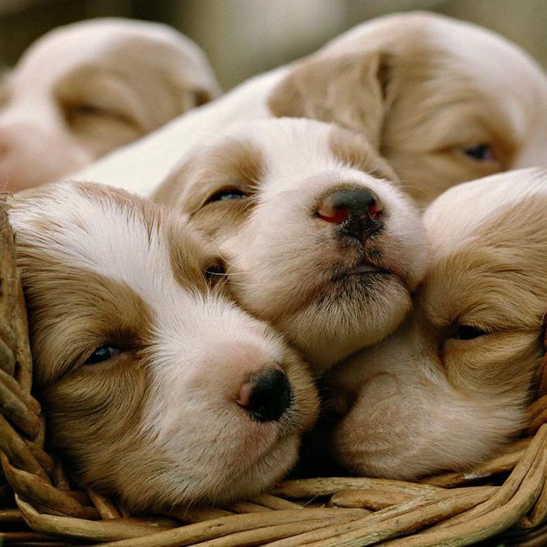 And Desktop Cute Dogs Puppies